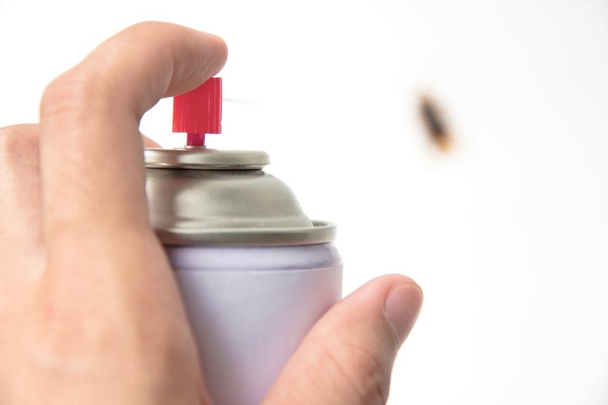 Dicas para afastar formigas e baratas da casa