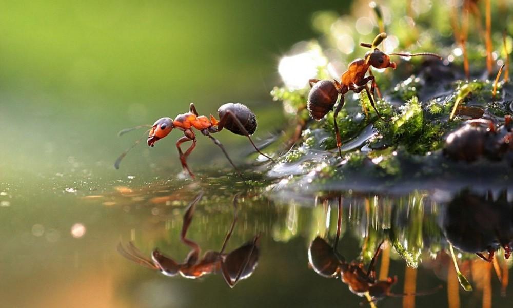 Dica para manter sua casa sem formigas