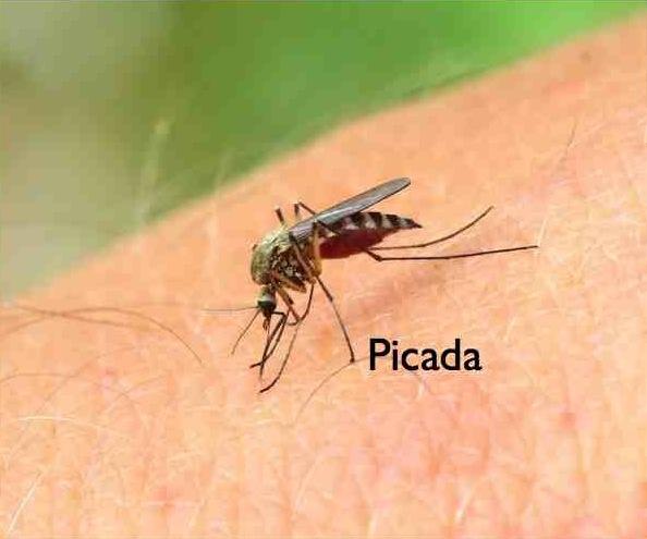Doença Zika prima da Dengue conheça os sintomas