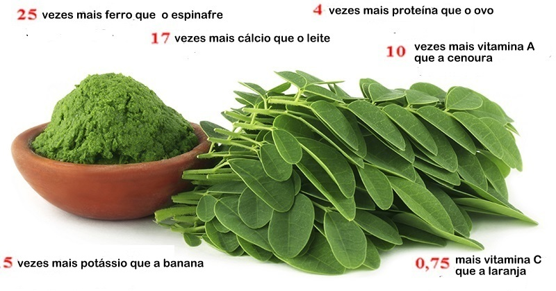 moringa planta cancer