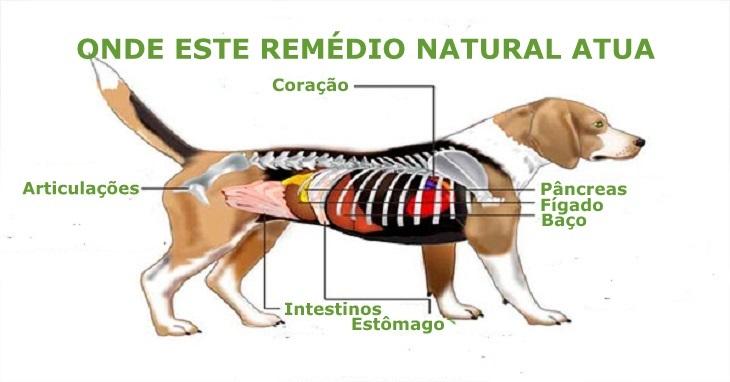 Remédio caseiro combate inflamações, previne câncer e aumenta a imunidade do seu cão