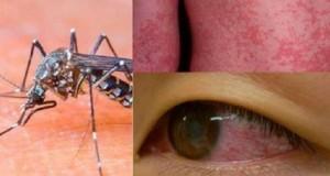 dengue_e_zika_-_o_protocolo_-_edit
