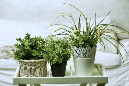 5 plantas para pegar no sono