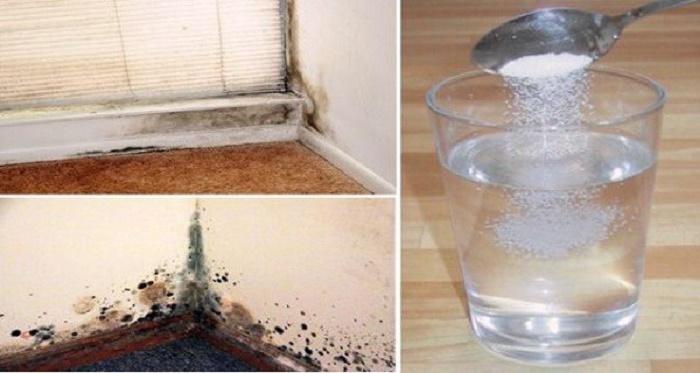 Basta pulverizar isto na parede para se livrar do mofo definitivamente