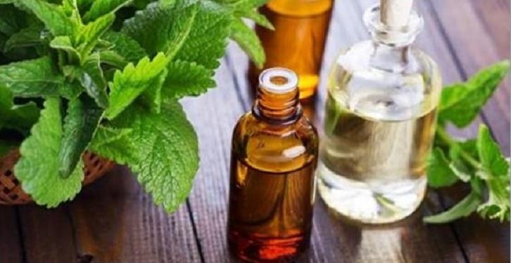Como fazer óleo de hortelã: para gripe, enxaqueca, dores musculares e de cabeça