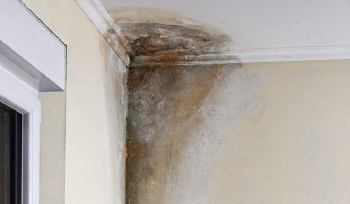 Elimine a umidade de sua casa para sempre com apenas isto