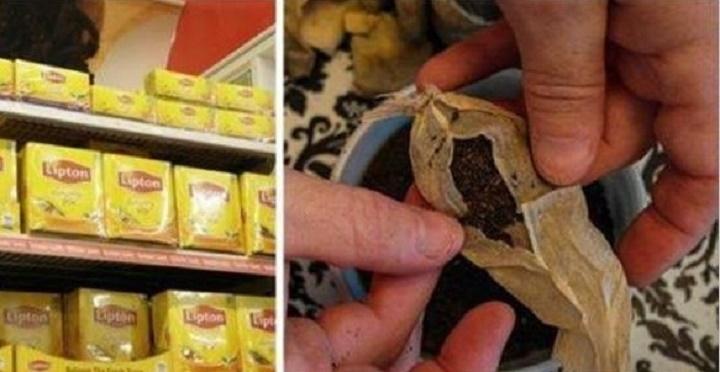Análise revela contaminação por substâncias cancerígenas em várias marcas de chá em saquinhos