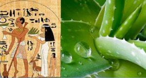 aloe_vera_-_babosa_-_egipcios_ed