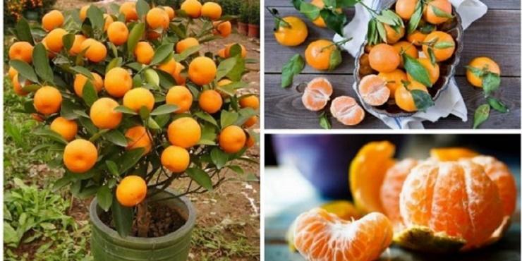 Se você fizer isto em um vaso de plástico, vai ter centenas de laranjas nas suas mãos