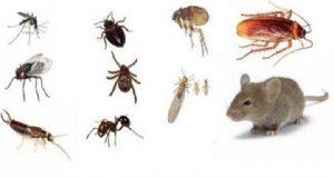 insetos_-_ratos_ed