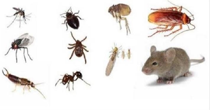 """7 truques simples para manter sua casa livre de ratos, baratas, formigas e de outros """"bichinhos"""" indesejados"""