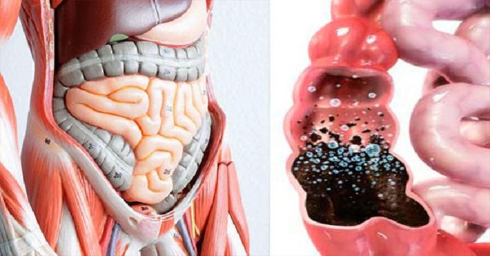 Método incrível para limpar o intestino e eliminar todas as toxinas do seu corpo
