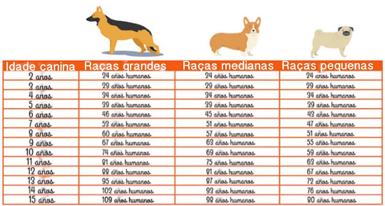 Qual a idade humana do seu cachorro? Esta tabela vai ajudar você a descobrir!