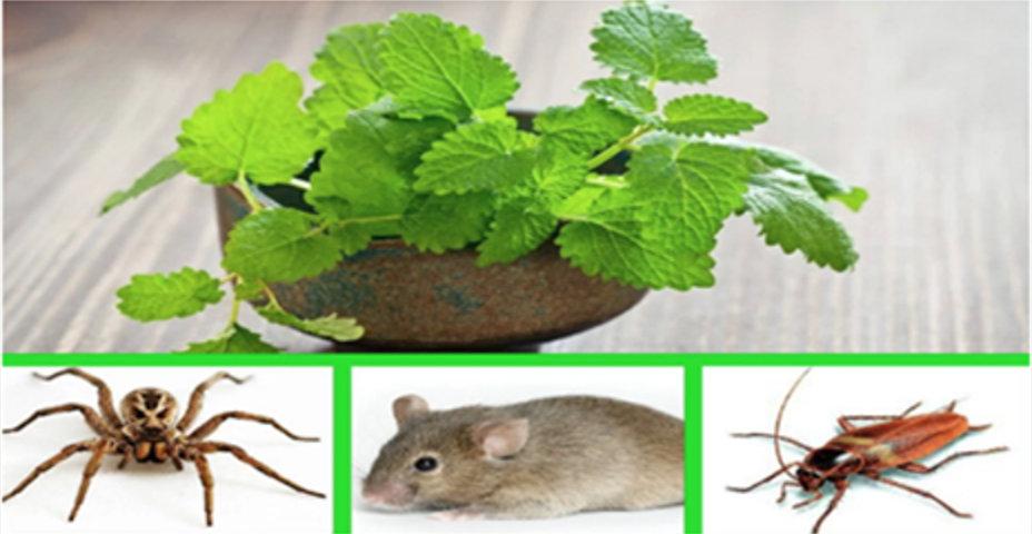 Com esta planta, você vai deixar sua casa livre de aranhas, ratos e baratas