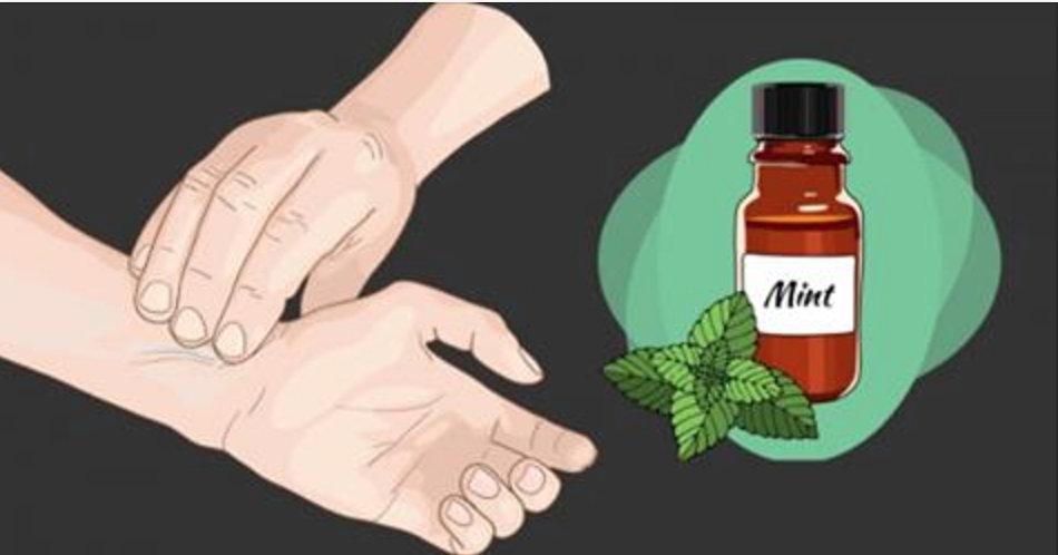 Como fazer óleo de hortelã em casa: para combater dores e ajudar a queimar calorias!