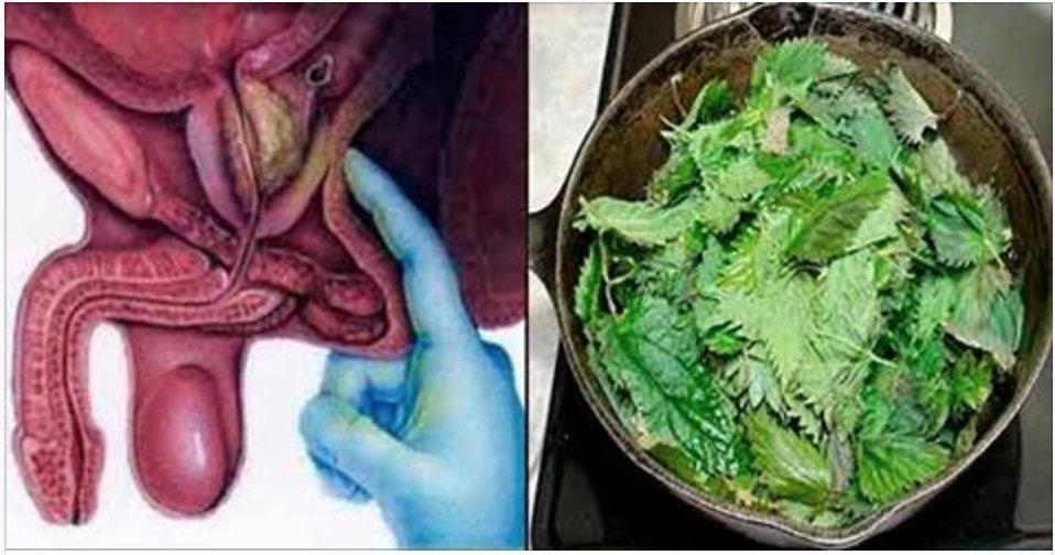 O chá desta planta desinflama próstata, previne câncer e ajuda a controlar diabetes