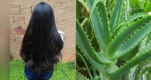 Aprenda-engrossar-o-cabelo-com-babosa-e-tenha-fios-encorpados-e-volumosos