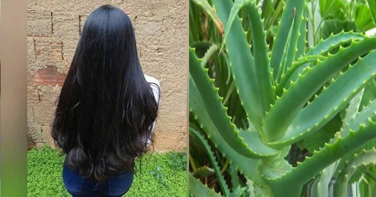 Aprenda engrossar o cabelo com babosa