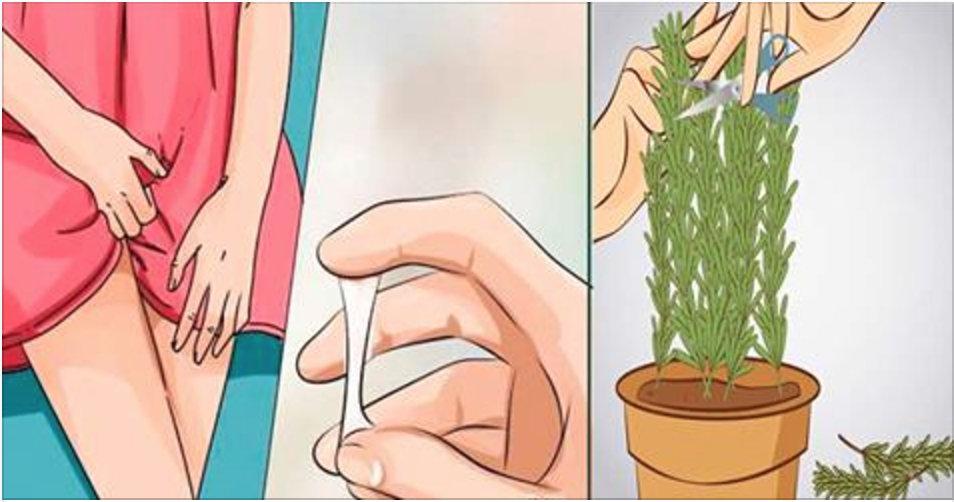 Você deve ter esta erva no jardim, mas não sabe que ela limpa a vagina, elimina fungo e trata cisto no ovário