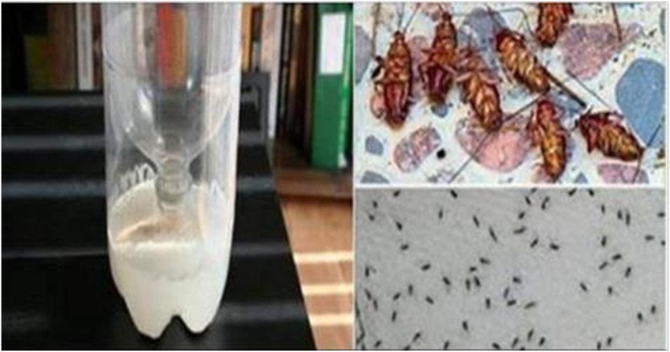 Testado, aprovado e recomendado – é o fim definitivo das baratas e formigas em sua casa