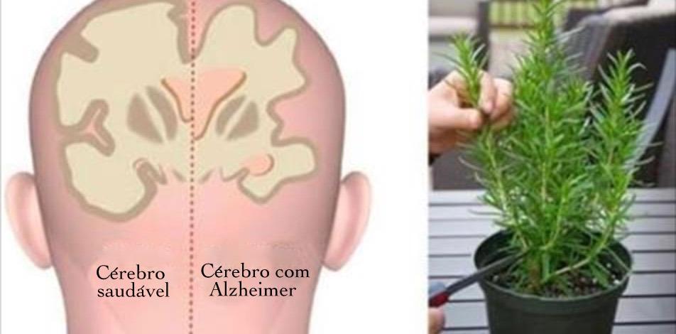 5 ervas que protegem contra Alzheimer, depressão e ansiedade