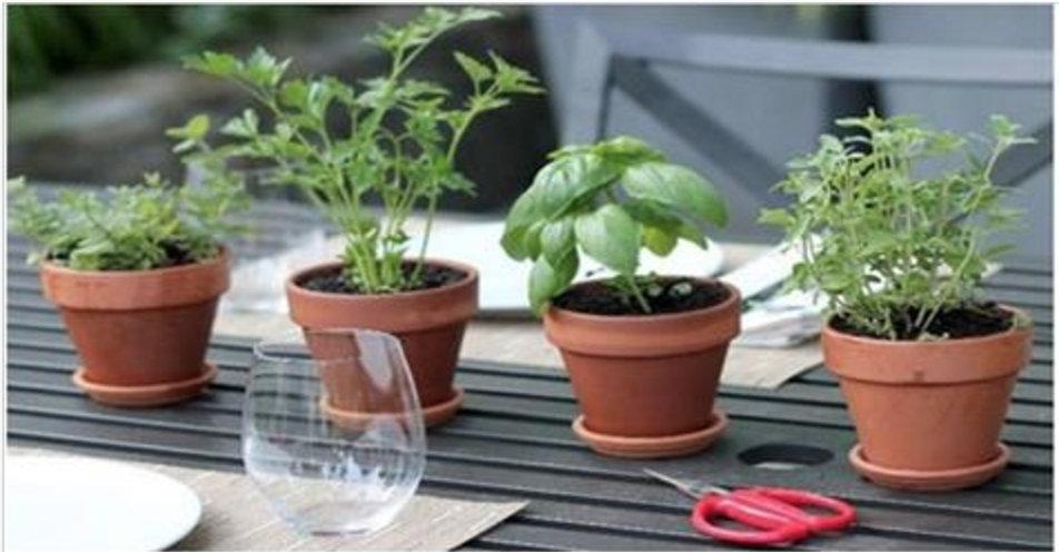 Estas 4 plantas protegem seu cérebro de Alzheimer, Depressão, Ansiedade e outros problemas