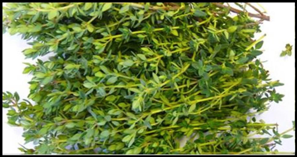 Essa erva é a mais poderosa para acabar com dores de estômago, diarreia, artrite, dor de garganta e vírus da gripe