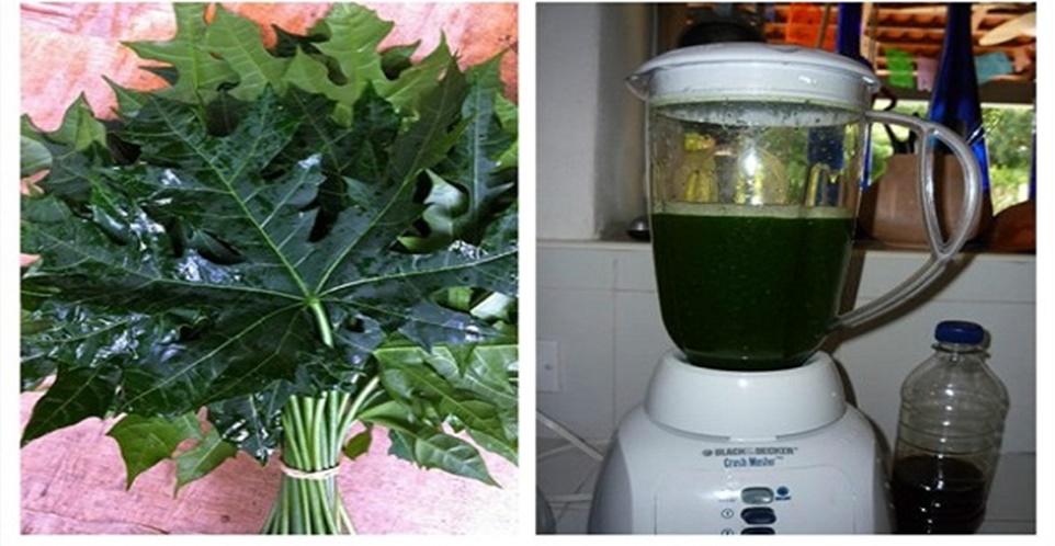 """Esta planta é chamado de """"milagre de Deus"""", porque ele pode curar mais de 100 doenças (Receita)"""
