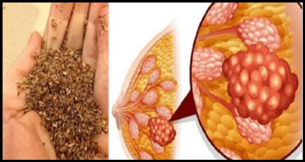 Se você consumir regularmente essas sementes mágicas, Irá prevenir se do câncer!