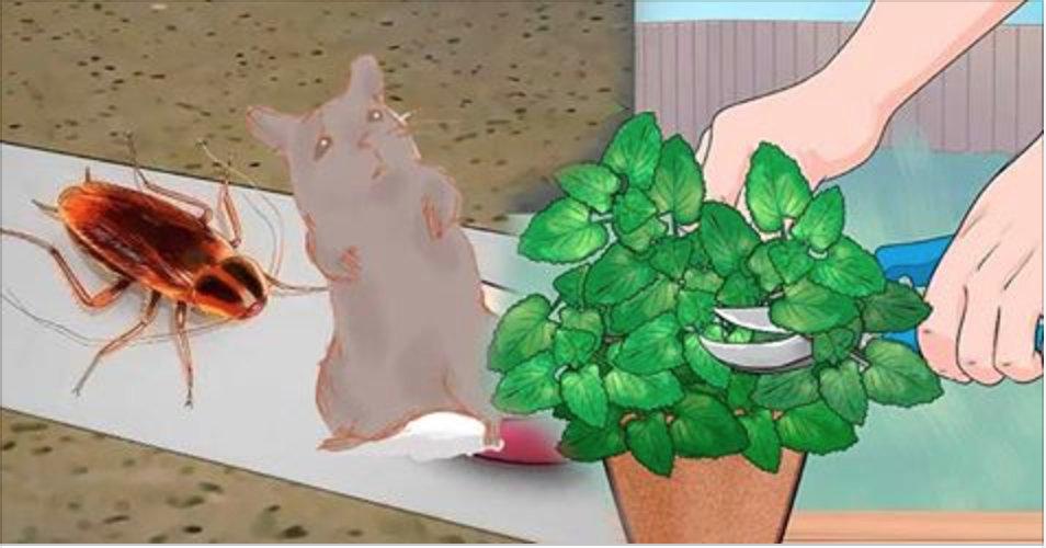 Coloque esta planta na sua casa e logo todos os ratos e baratas vão desaparecer!