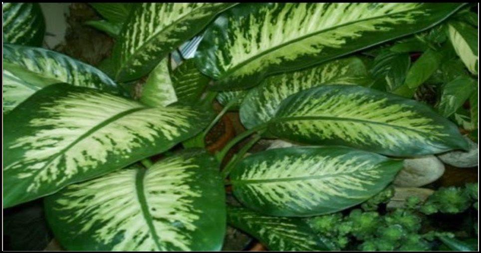 Meu filho morreu ao ingerir esta planta. É urgente que todos saibam, mata uma criança em 1 minuto e um adulto em 15