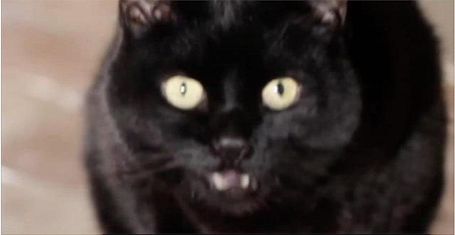 Isto é o que acontece quando você leva um gato para viver dentro de sua casa – comprovado pela ciência!