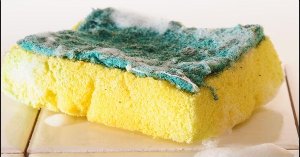 Esponja de lavar louça acumula 680 milhões de fungos e bactérias em 15 dias de uso, diz pesquisa