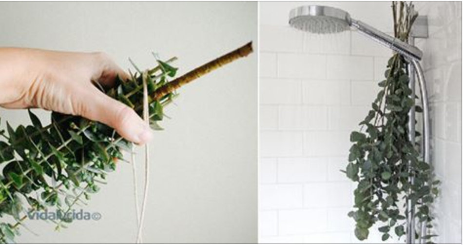 Coloque esta erva no seu chuveiro e alivie rapidamente os sintomas da rinite e sinusite