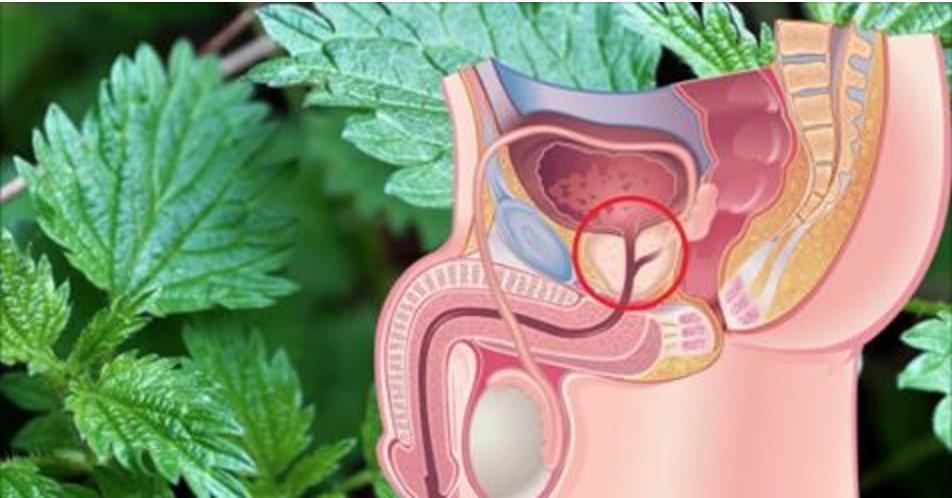 Mulheres, protejam seu marido: o chá desta planta é a melhor proteção contra o câncer de próstata!