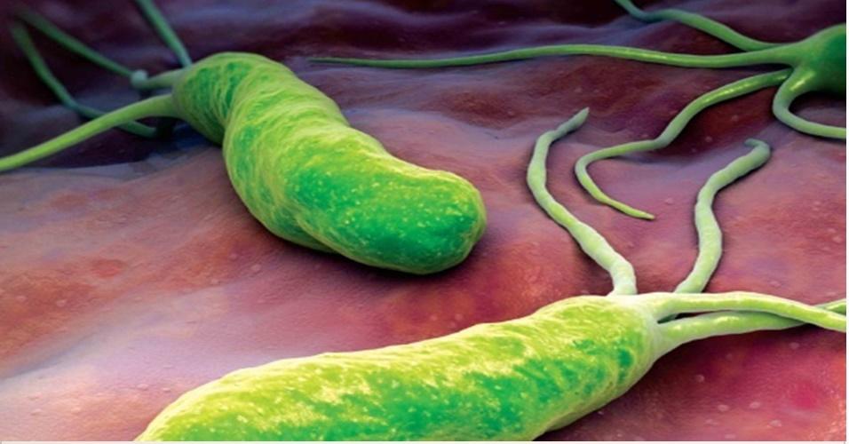 Helicobacter-2