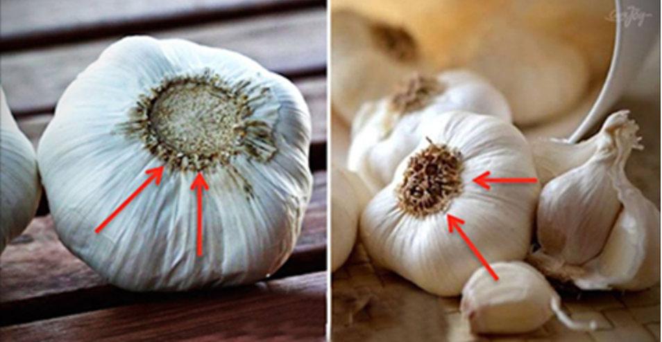 Vamos ensinar você a reconhecer se está sendo lentamente envenenado pelo alho que consome!