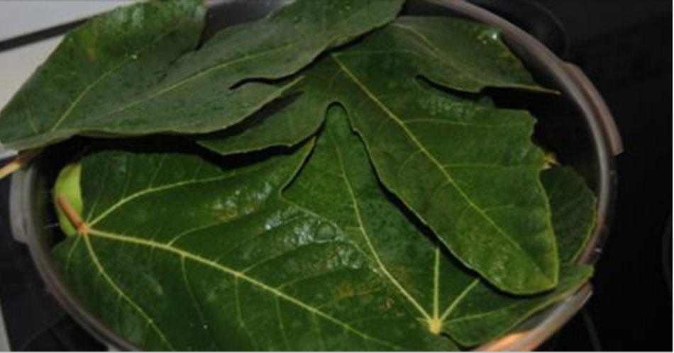 Esta é a mais poderosa de todas as plantas: controla diabetes, normaliza colesterol e protege contra AVC e infarto!