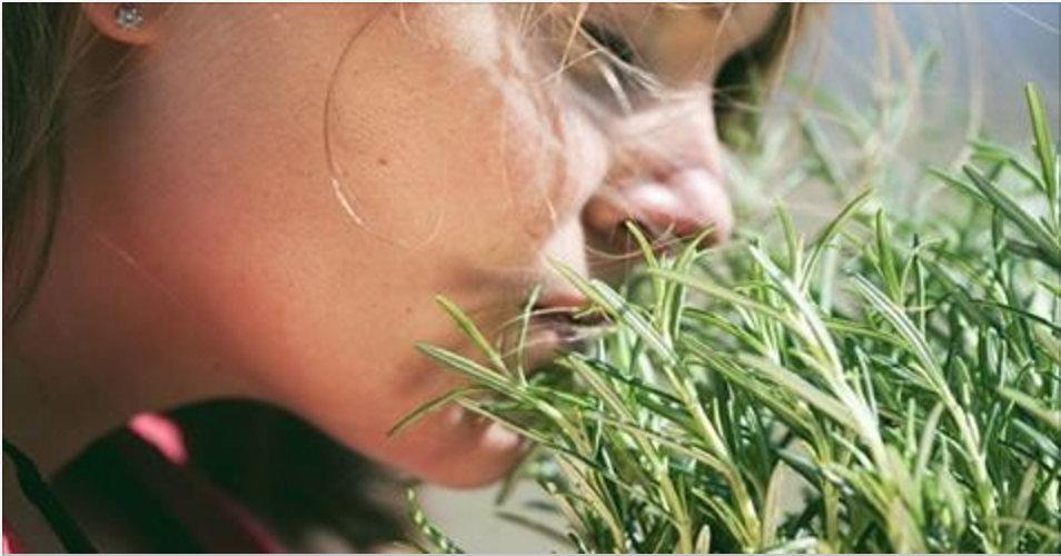 Como usar o alecrim para deixar seu corpo e mente com muita energia!