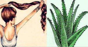cabelo_-_babosa