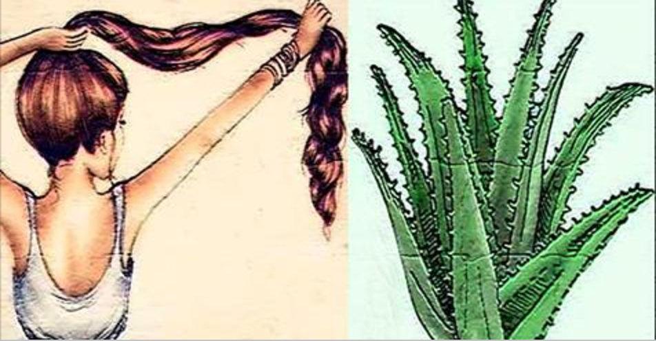Existe uma única forma de fazer o cabelo crescer mais rápido e parar a queda dele com babosa – e é esta!