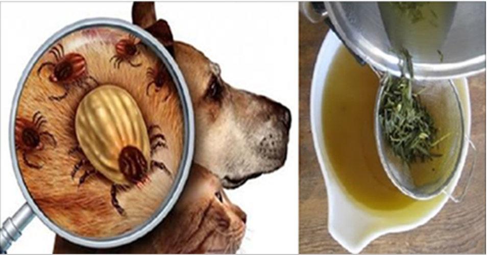 Afaste as pulgas e carrapatos do seu cão ou gato usando estes potentes remédios caseiros!