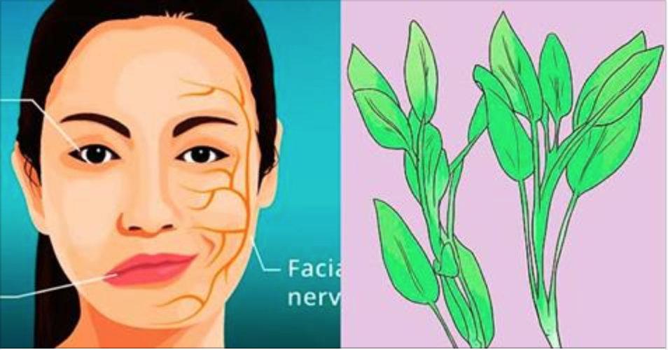 Esta erva faz muitos milagres – ferva e cure o reumatismo, a tosse, bronquite, feridas e melhore a circulação!