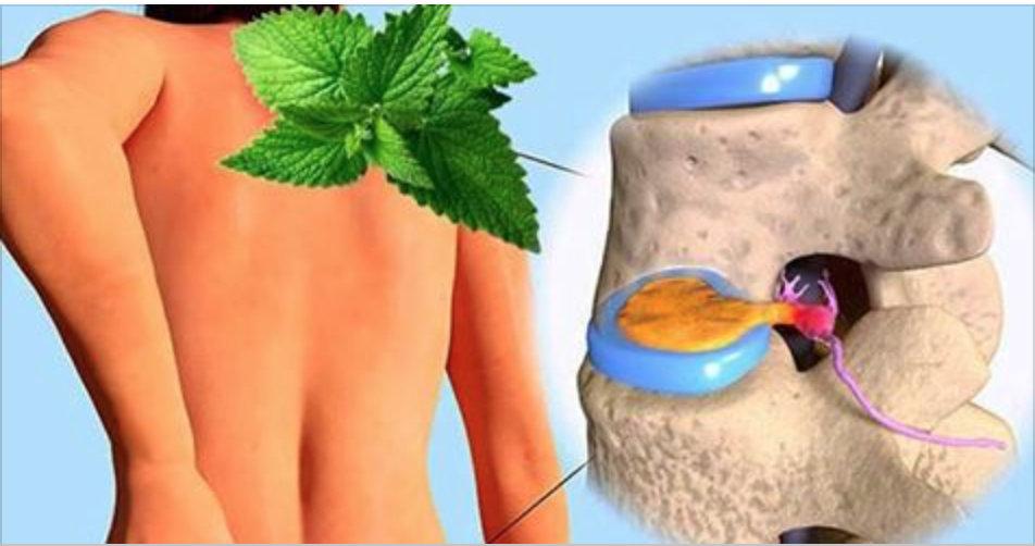 Esta é a forma de recuperar a cartilagem dos joelhos e quadril com hortelã!