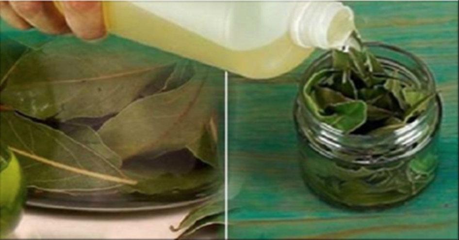 Esta folha é uma bênção de Deus: combate insônia, pressão alta, açúcar e gordura no sangue!