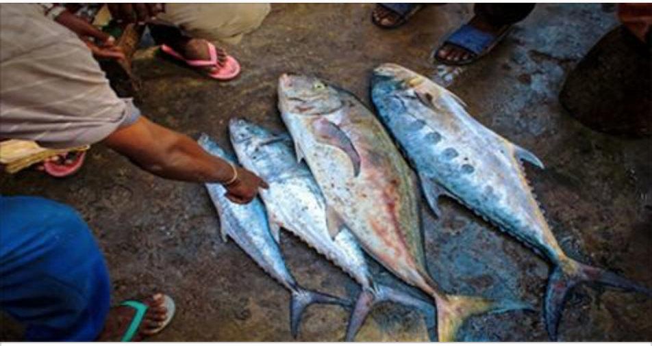 8 motivos para nunca mais comer atum – com o número 1, você vai ficar chocado!