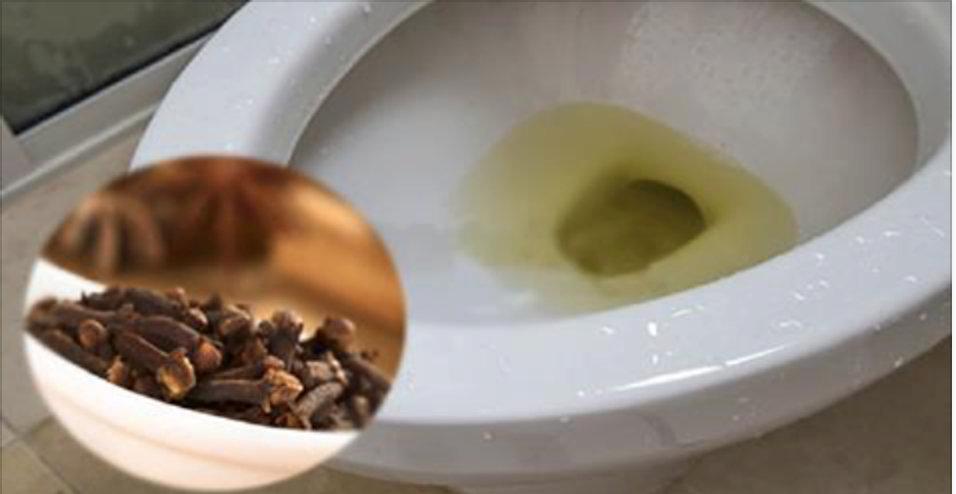 O truque mais fácil para você eliminar rapidamente o cheiro de urina do seu banheiro – e não passar mais vergonha com as suas visitas!