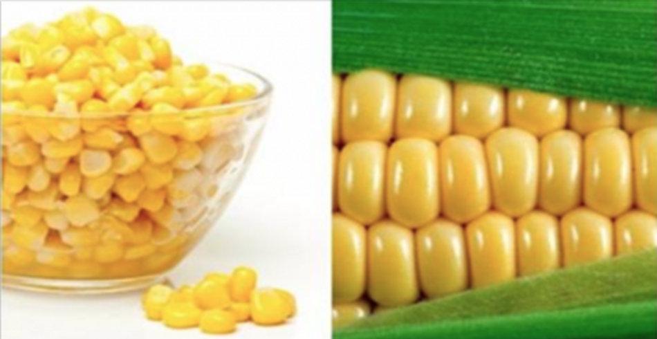 A verdade chocante sobre o milho – 5 razões para você parar de comer milho imediatamente!