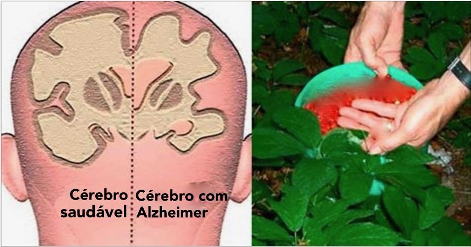 4 ervas que estão ao seu alcance e protegem você de Alzheimer, ansiedade e depressão!