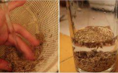 Esta semente tem grande poder: desentope artérias, cura o fígado e controla pressão e diabetes.